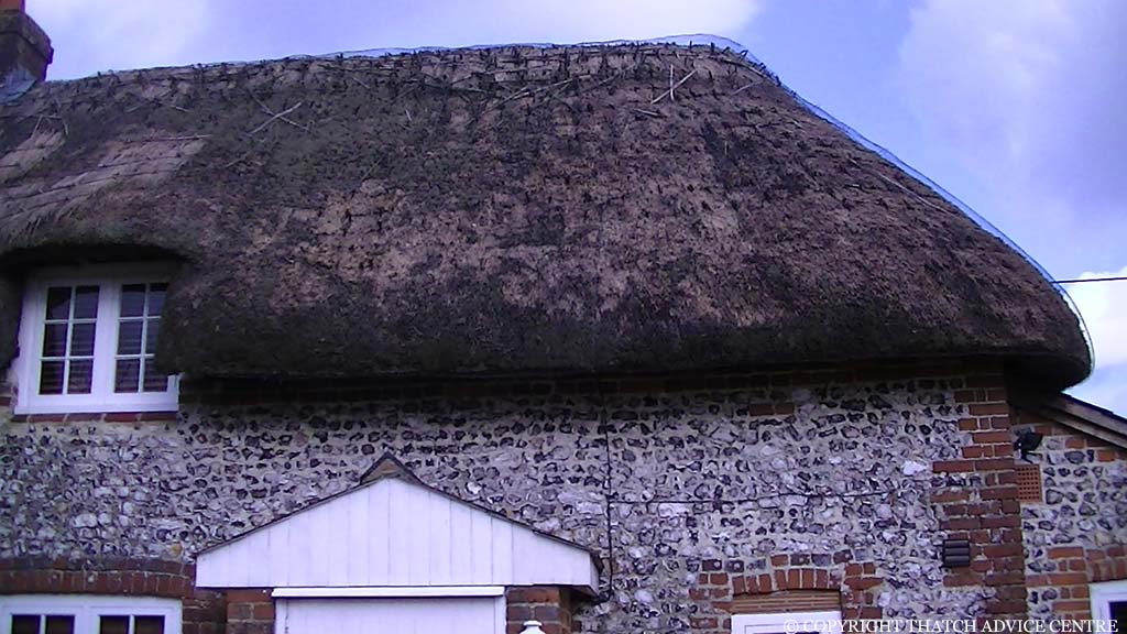 PDF ... & Life Expectancy of Thatched Roofs - Thatch Advice Centre memphite.com