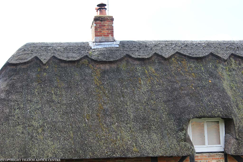 Thatch maintenance thatch advice centre for Fire resistant roofing