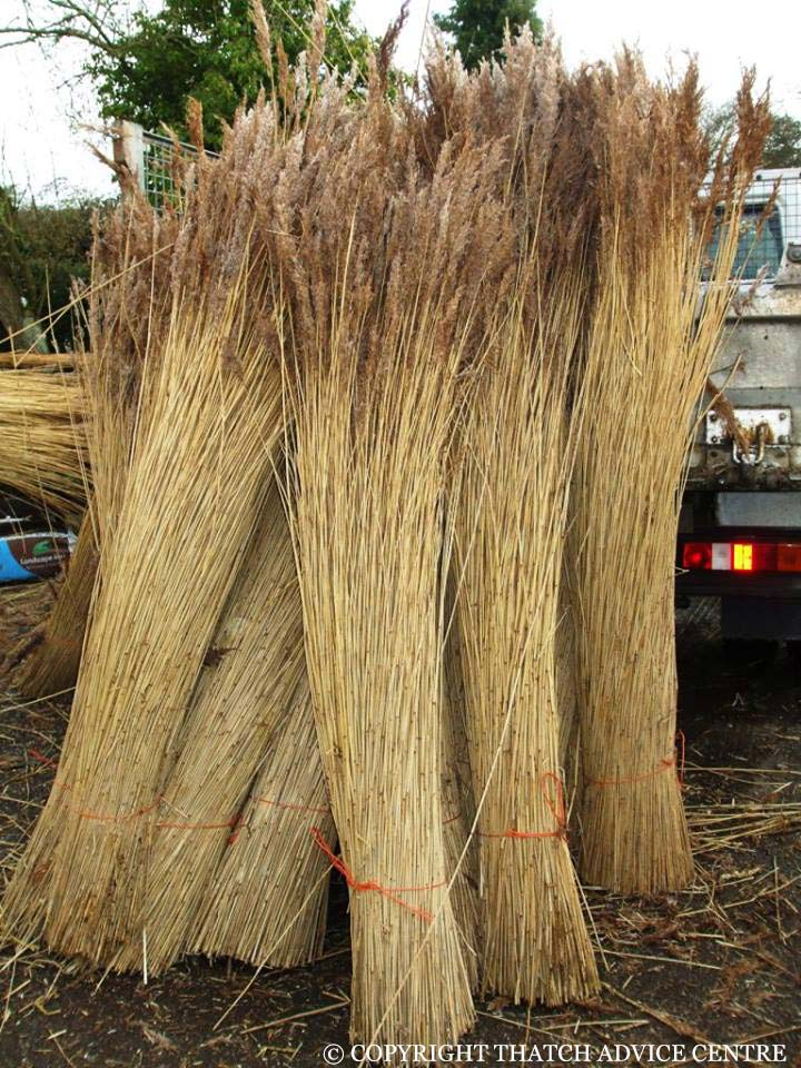 Water Reed Production