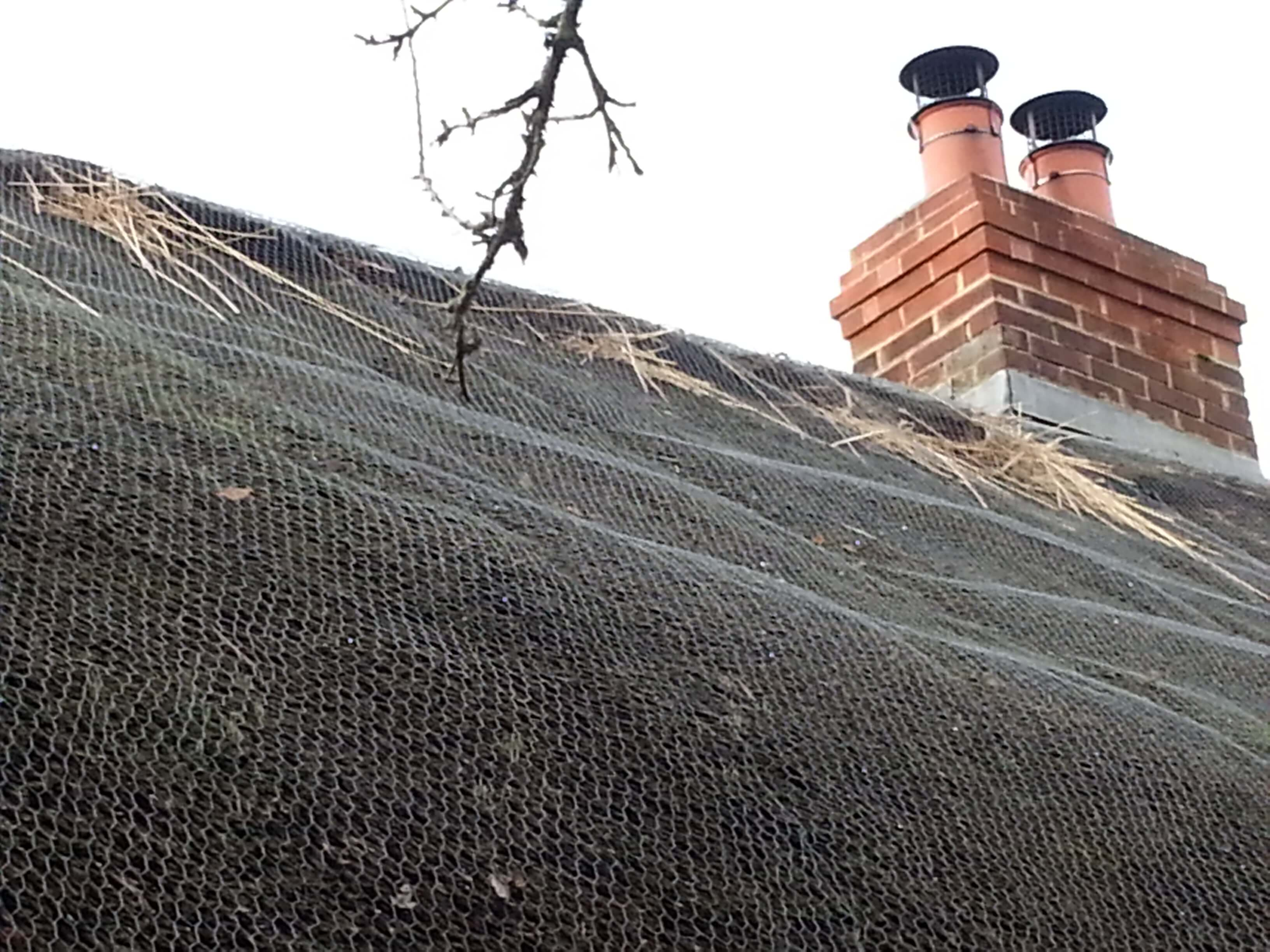 Thatch Pests And How To Deal With Them