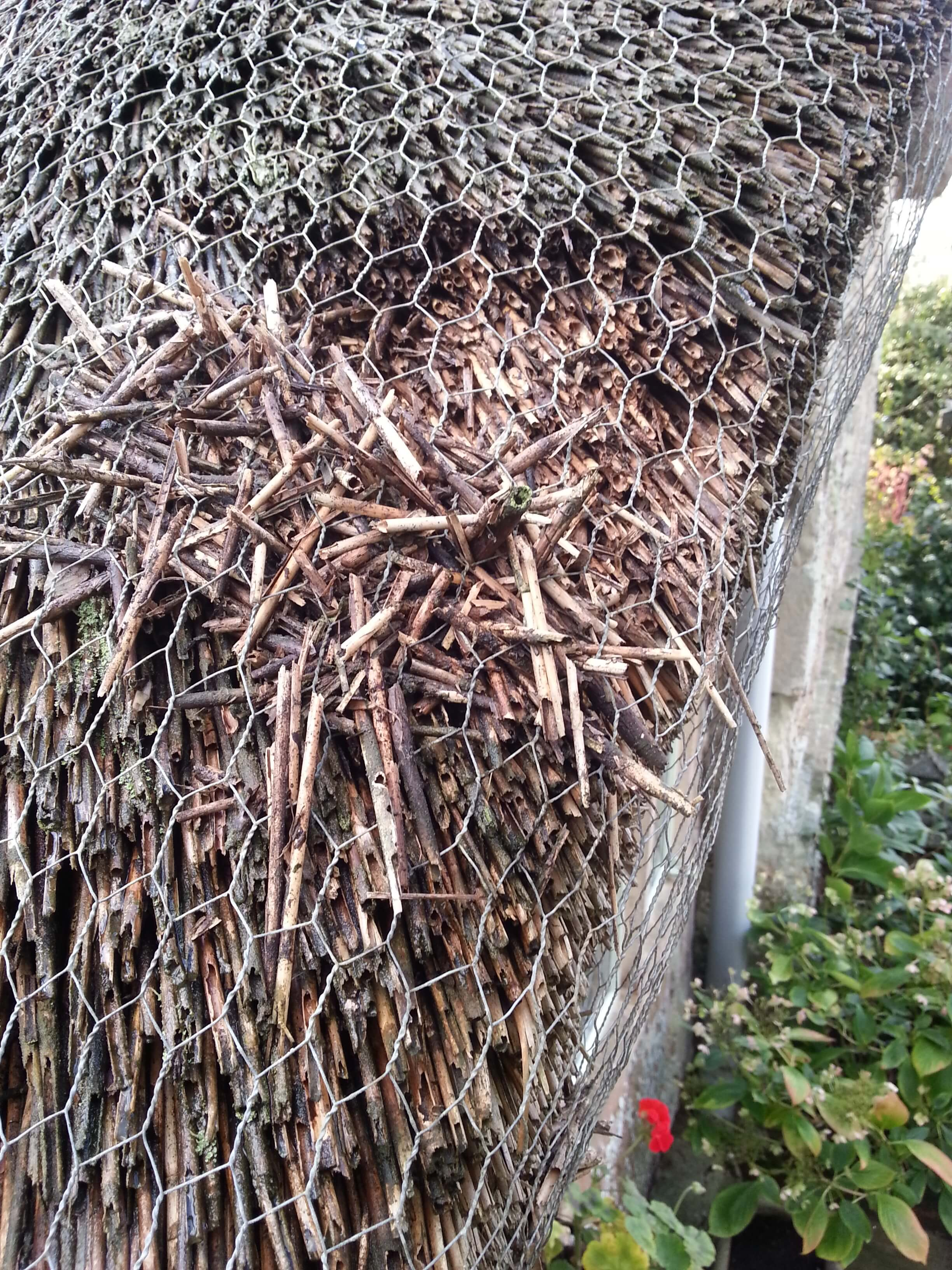 Thatch Pests And Ways To Deal With Them