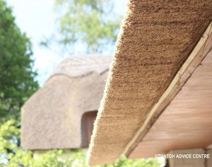 C Thatch Advice Centre 2015 eave