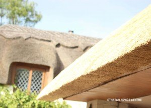 C Thatch Advice Centre 2015 eave2