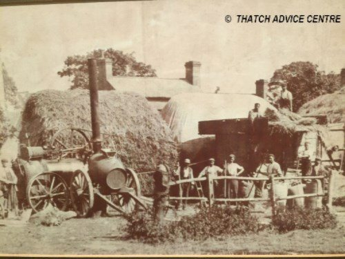 thatch-advice-centre