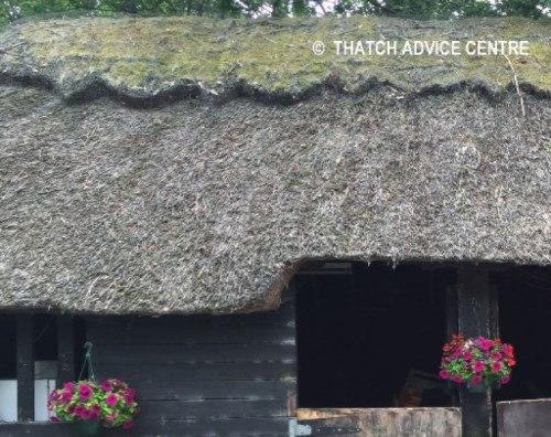 thatch-longevity