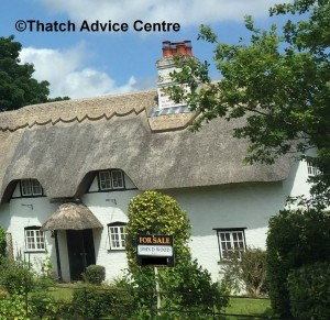 Selling Thatch