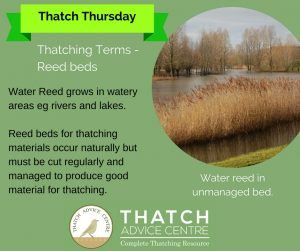 Unmanaged Water Reed bed