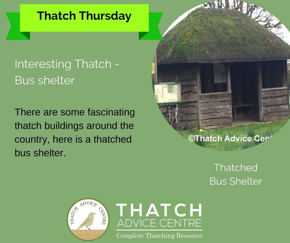 thatchbusshelter