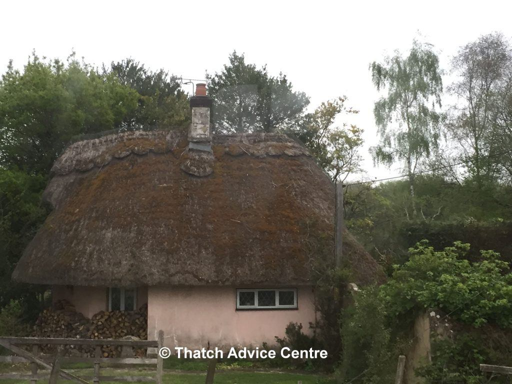 Thatch Maintenance - required