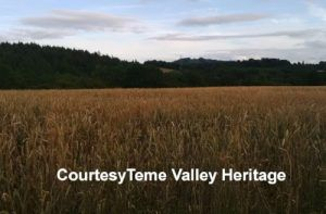 thatch advice centre Teme Valley