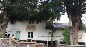 thatch-advice-centre-roof-decay