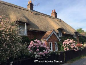 thatch-advice-centre-september-2017-newsletter