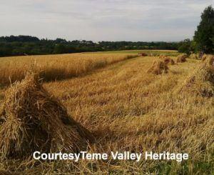 thatch-advice-centre-teme-valley