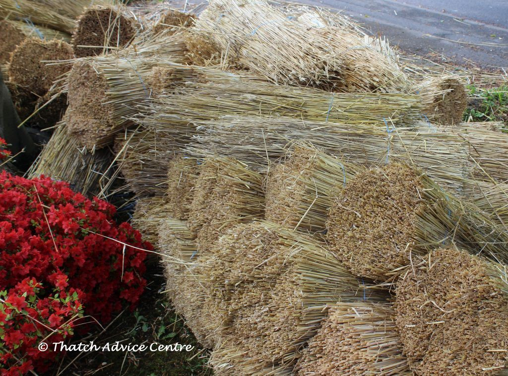 Thatching Straw