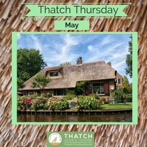 Thatch Thursdays May 18 Picture of the Month