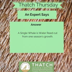 Thatch Thursdays May 18 Whale A