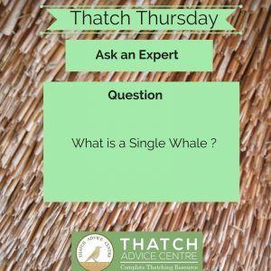 Thatch Thursdays May 18 - Whale Q