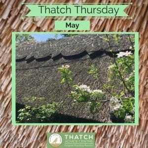 Thatch Thursdays May 18 Blossom