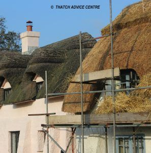 Thatching specification 1
