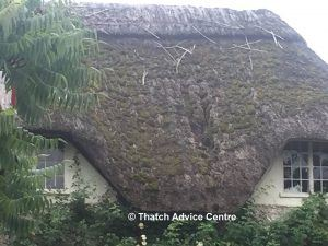 Specifications for thatching 2