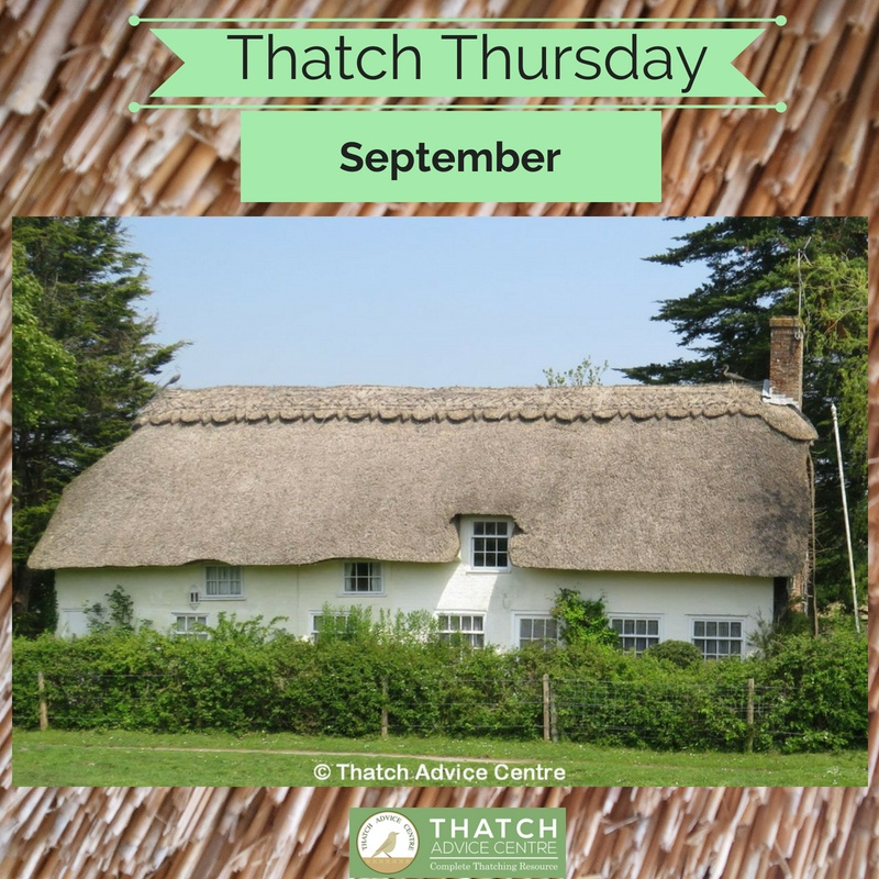 Thatch Thursdays September 2018