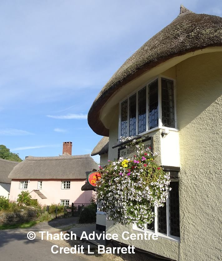 Thatch Advice Centre Newsletter 19
