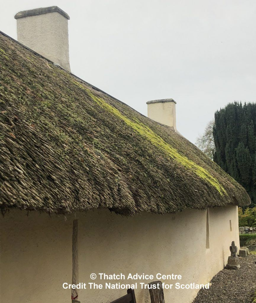 C- Thatch Advice Centre 2019 - Burns Cottage Appeal moss