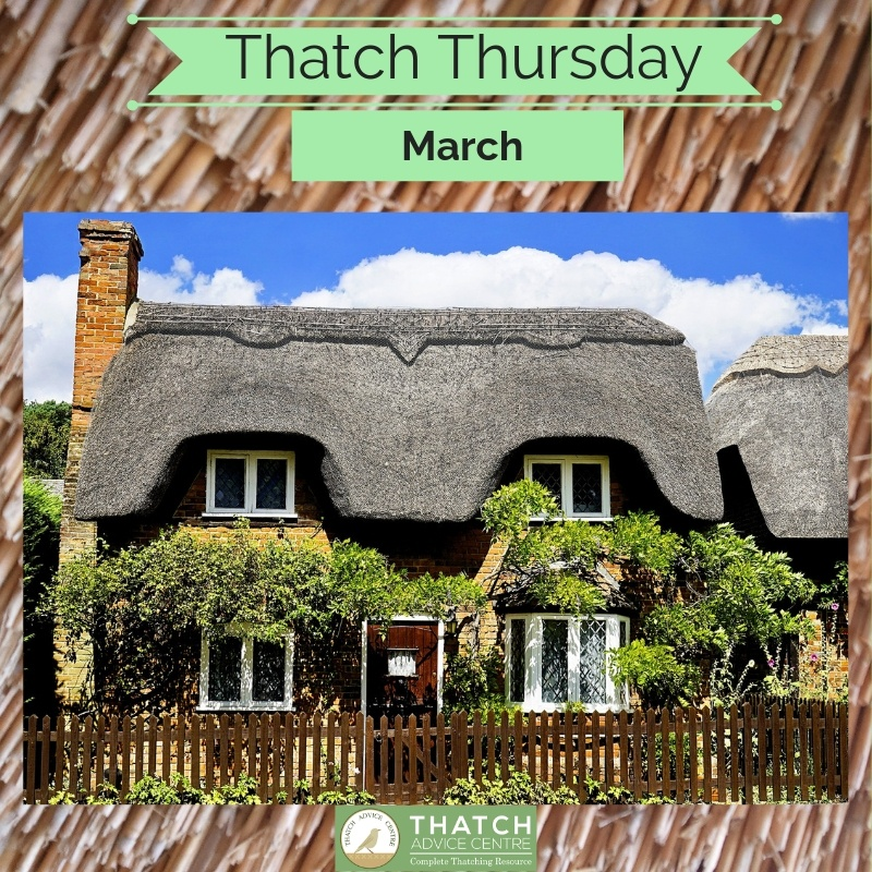 Thatch Thursday March 2019
