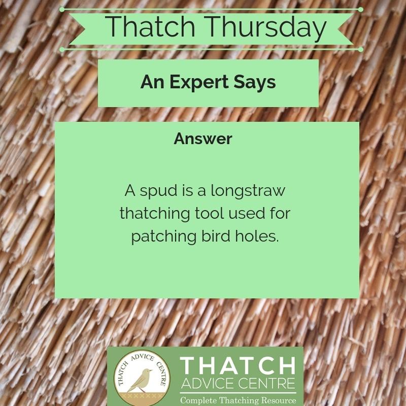 Thatch Thursdays June 2019