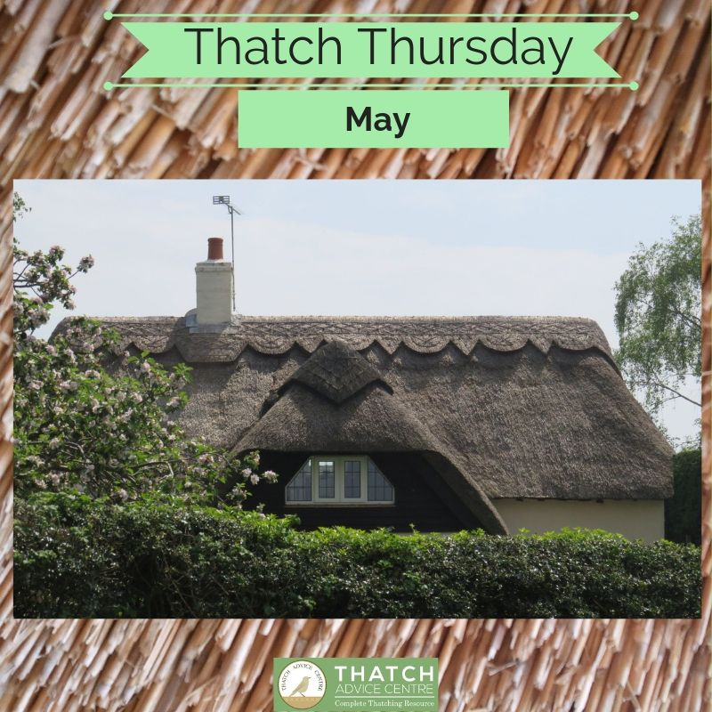 Thatch Thursday May 2019