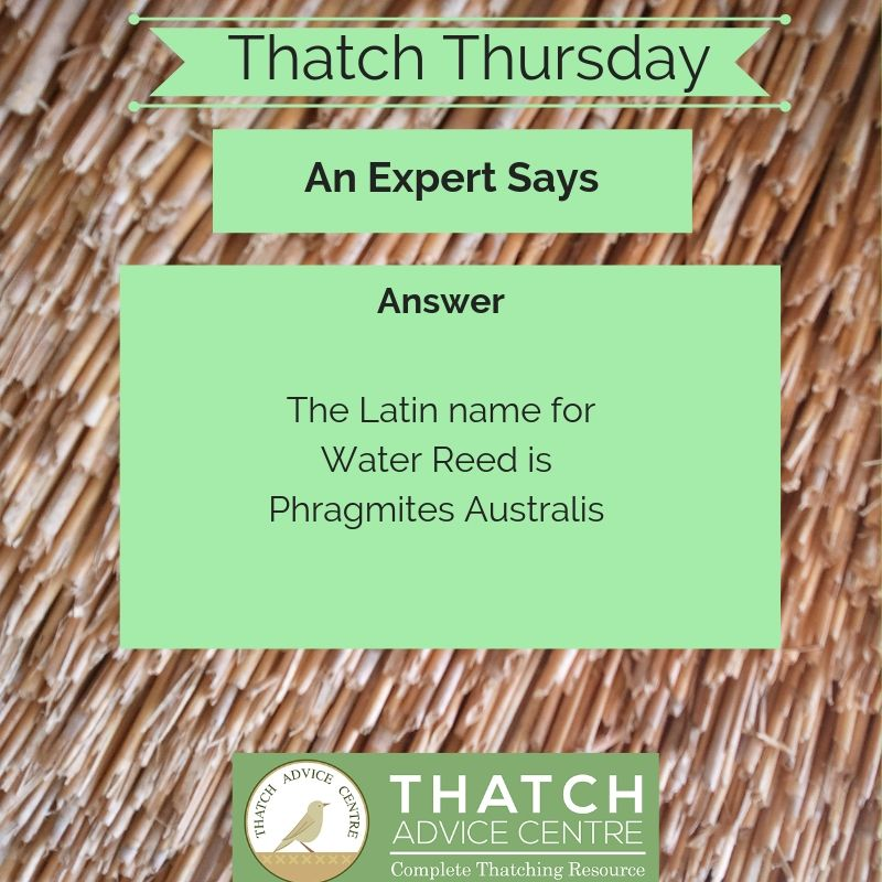 Thatch Thursday July 2019