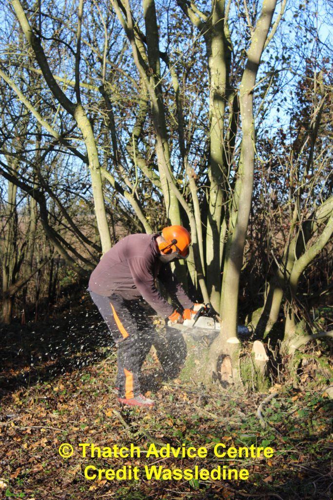 National Coppice Week 2019 Coppicing Chester Wood