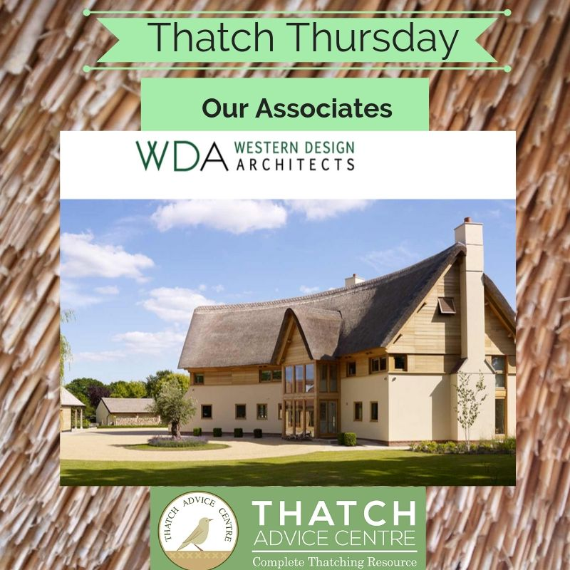 Thatch Thursdays Associate