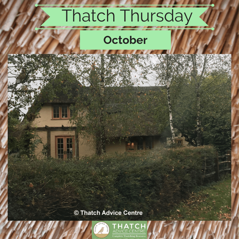 Thatch Thursdays Picture of the month
