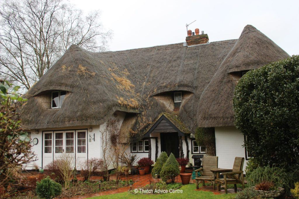 Thatch Advice Centre - vermin in a thatched roof - pests