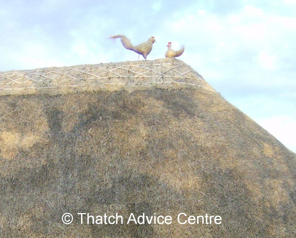 Thatch Finial Fun competition- chicken finials