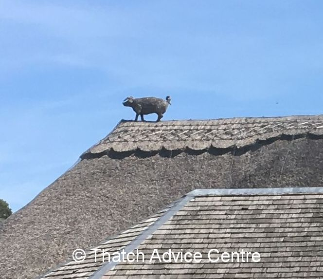 Thatch Finial - pig - alternative uses of thatching materials
