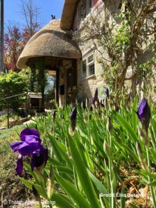Thatch Finial Fun Gallery - Credit E Butcher blackbird on porch with great iris in foreground