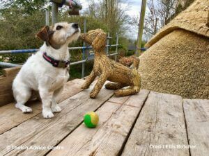 Thatch Finial Fun Gallery - Credit E Butcher terrier with ball 2
