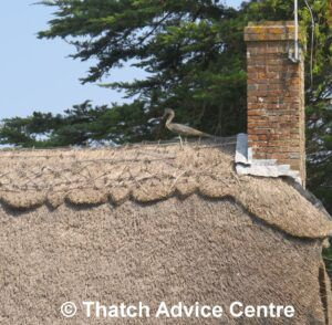 Thatch Finial Fun Gallery - Beaulieu bird