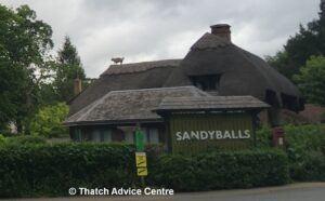 Thatch Finial Fun Gallery - Sandy Balls pig