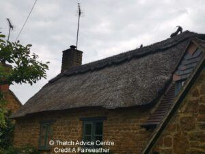 Thatch Finial Fun Gallery - Credit A fairweather - cat and mouse 2