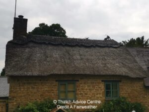 Thatch Finial Fun Gallery - Credit A fairweather cat and mouse