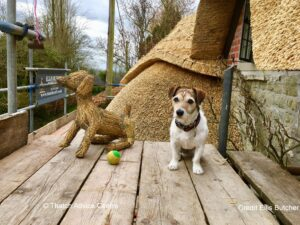 Thatch Finial Fun Gallery - Credit E Butcher terrier with ball