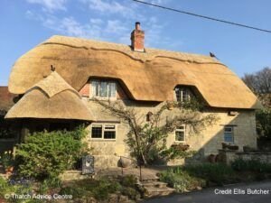 Thatch Finial Fun Gallery - Credit E Butcher pheasant and blackbird on roof