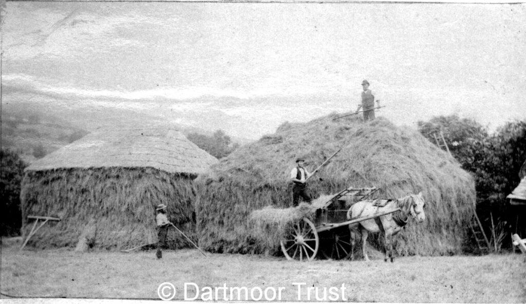 Dartmoor Trust building hayricks at Foxworthy