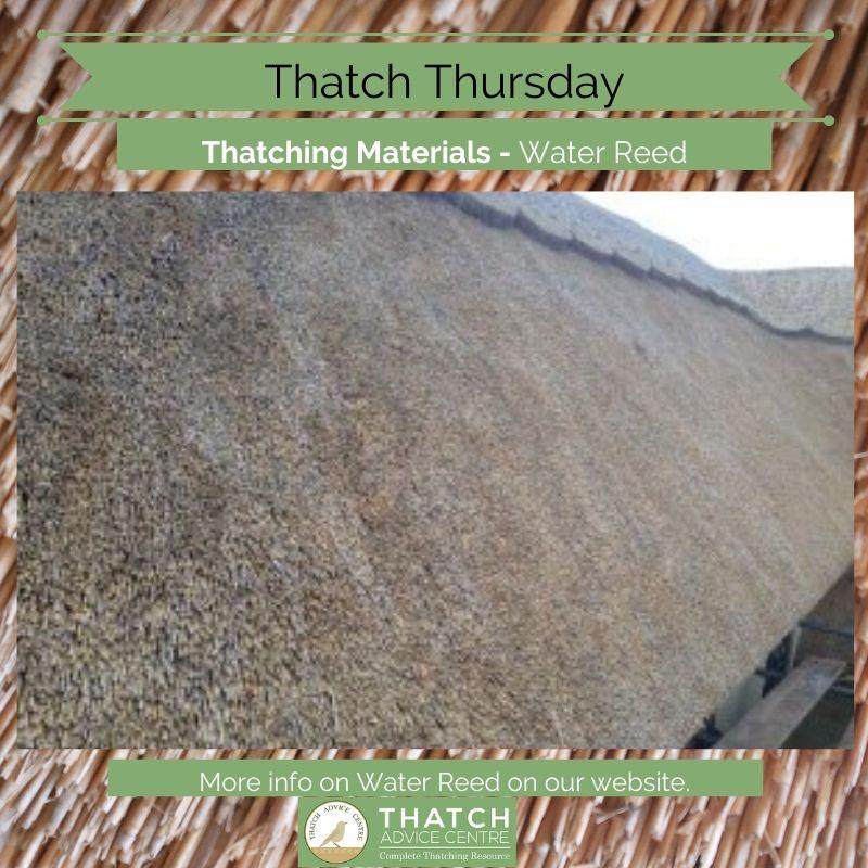 Thatch Thursday