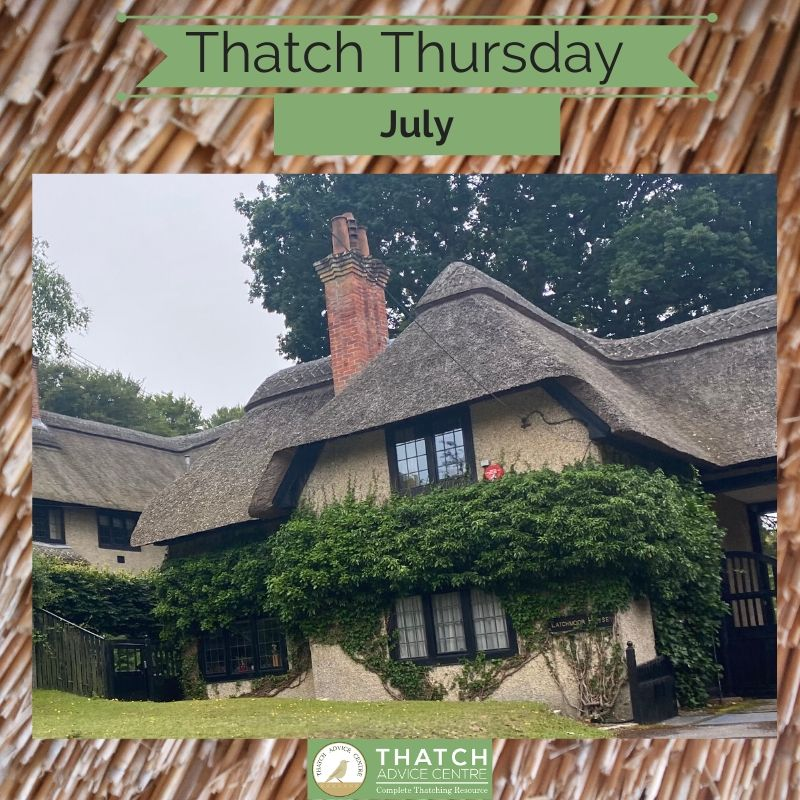 Thatch of the month