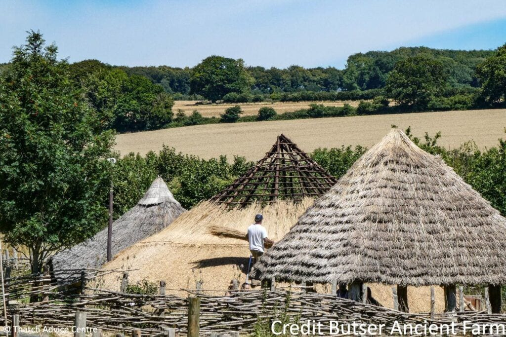 Thatch Advice Centre Butser Ancient Farm - rethatching works