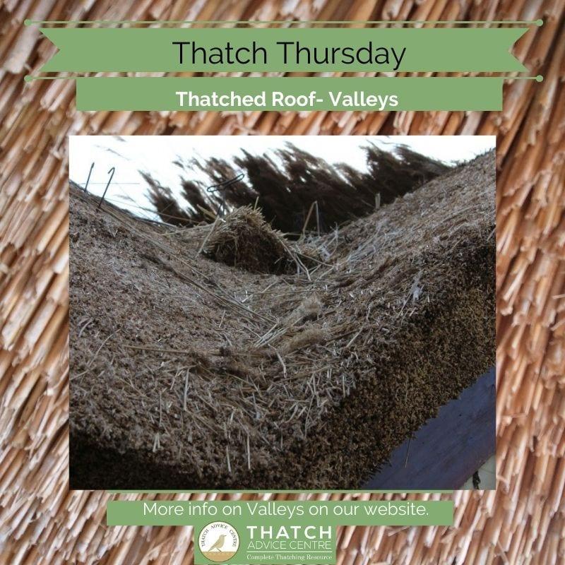 Thatch Thursdays
